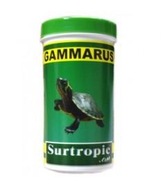 Gammarus surtropic 100ml 10gr