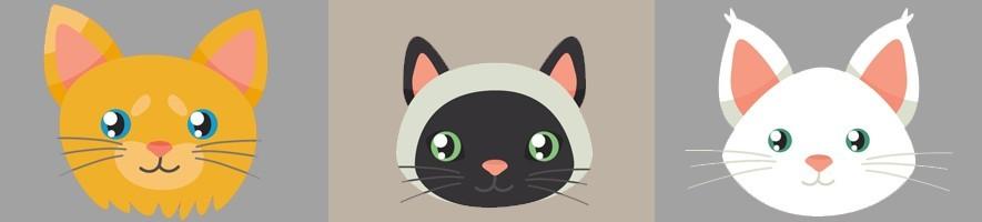 Accesorios para gatos ???? El Mundo Animal