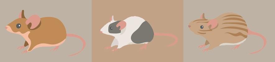 Accesorios para roedores ???? El Mundo Animal