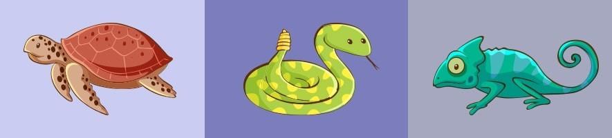 Accesorios para reptiles ???? El Mundo Animal