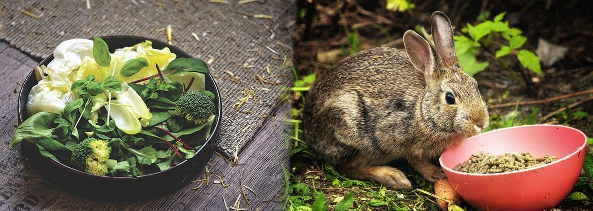 Juquetes para Hamster, cobayas y mas accesorios para roedores solo en El Mundo Animal