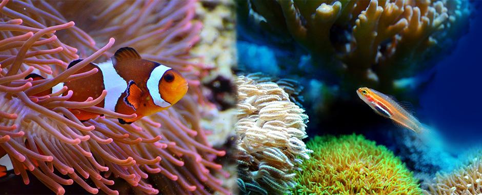 Acondicionador de agua para acuarios y todo lo referente al cuidado de tus peces en El Mundo Animal