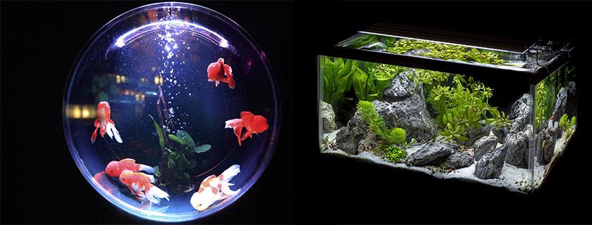 El Mundo Animal te trae los mas bellos acuarios y peceras pequeñas.