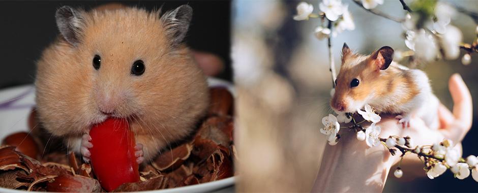 Champu para conejos e higiene para roedores