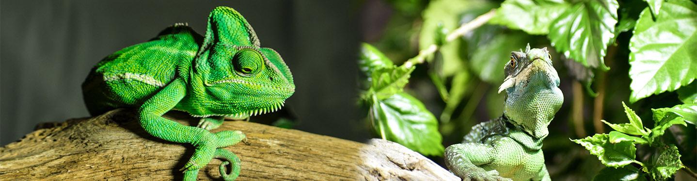 Venta de comedero para tortugas, termómetro para terrarios y artículos para reptiles