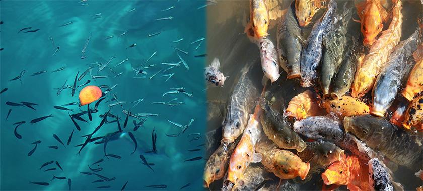 La mejor comida para peces en El Mundo Animal. Alimentación nutritiva para peces