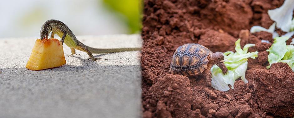 Comida para tortugas, terrestres y de agua, tambien comida para reptiles en general en El Mundo Animal.