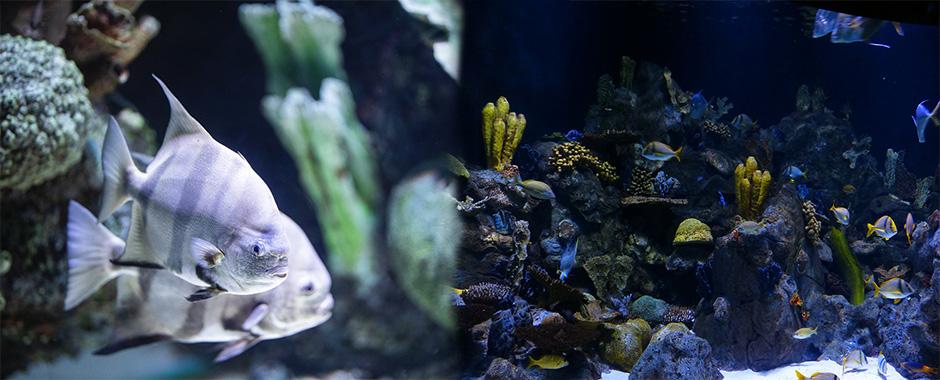 Filtros para acuarios de todos los tamaños y tipos en El Mundo Animal.