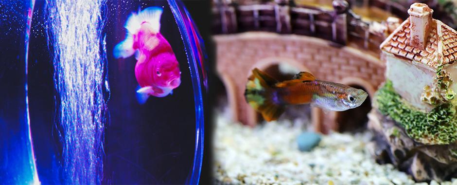 Adornos para acuario, grava y roca para acuarios en El Mundo Animal